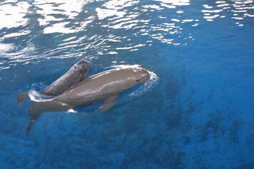壁纸 动物 海洋动物 鲸鱼 桌面 500_333